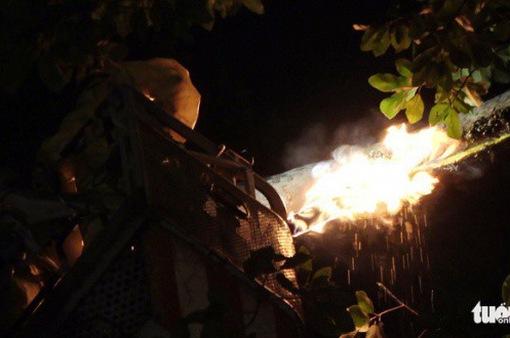 """Cảnh sát cứu hỏa TP.HCM phá tổ ong mật """"khủng"""" trên cây cao"""