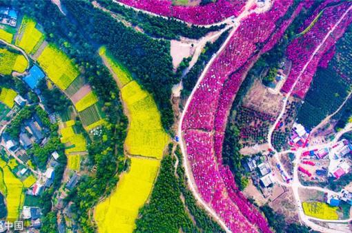 Mùa hoa nở Trung Quốc thu hút hàng ngàn khách du lịch