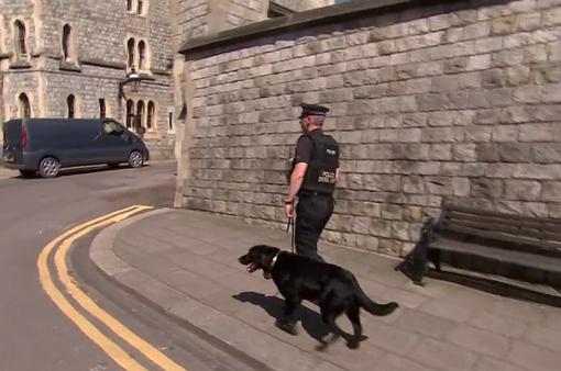 Huấn luyện chó đảm bảo an ninh đám cưới Hoàng tử Anh