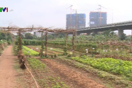 Xu hướng thuê đất trồng rau sạch