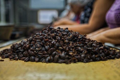 Giá vỏ cà phê đắt gấp 5 lần hạt cà phê