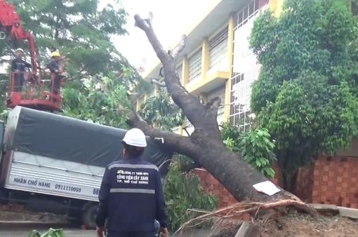 TP.HCM: Mưa lớn, cây xanh ngã đổ làm sập nhà dân