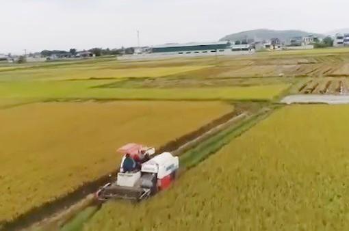 """Nghệ An: Khởi tố 2 đối tượng chuyên """"làm luật"""" bảo kê máy gặt lúa"""