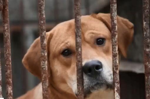Trung Quốc: Lễ hội thịt chó gây tranh cãi vẫn diễn ra trước sức ép của dư luận