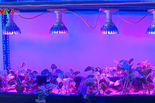 Điều chỉnh độ dinh dưỡng cây trồng nhờ công nghệ ánh sáng