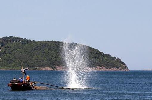 Tận diệt hải sản bằng thuốc nổ: Hiểm họa khôn lường