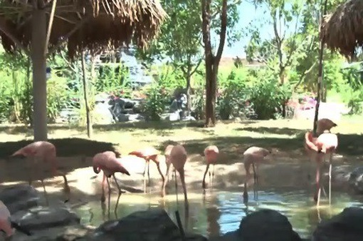 Vườn thú hoang dã lớn nhất Bắc Trung Bộ