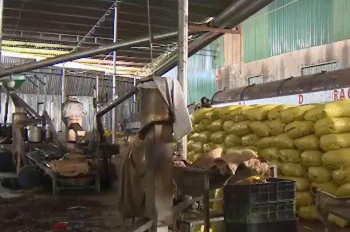 Nhiều nhà máy điều tại Bình Phước đóng cửa do thua lỗ