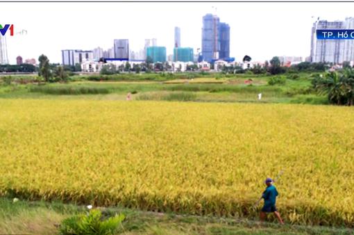 TP.HCM chuyển đổi hơn 26.000 ha đất nông nghiệp