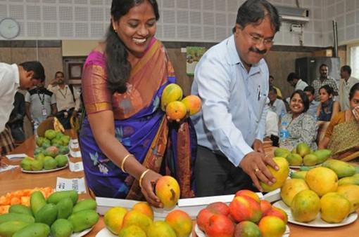 Ấn Độ: Lễ hội với 500 loại xoài phổ biến nhất