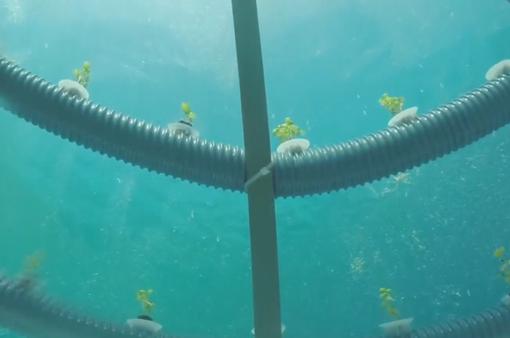 Khám phá trang trại trồng rau nằm sâu dưới đáy biển