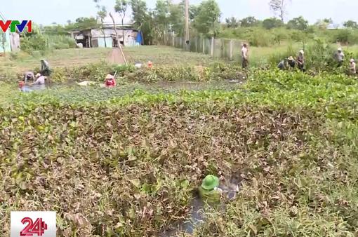 Hàng ngàn người dân Tiền Giang tham gia diệt lục bình trên kênh, rạch