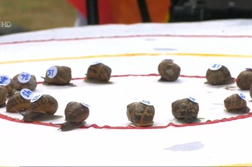 Vui nhộn Giải vô địch đua ốc sên thế giới