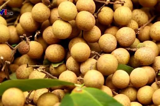 Thêm 20 tấn nhãn Hưng Yên có mặt tại thị trường Mỹ