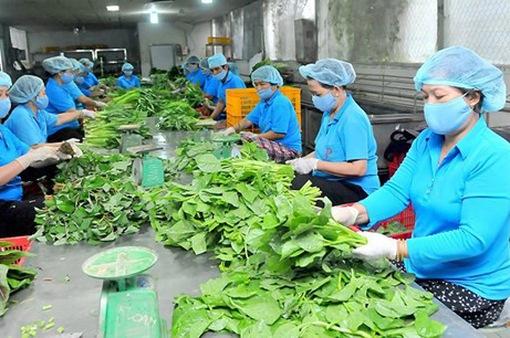 Nhiều giải pháp phát triển 15.000 hợp tác xã nông nghiệp hiệu quả