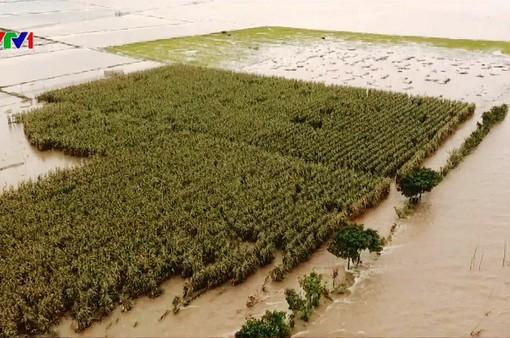 Đồng Tháp: Không thống nhất kế hoạch xả lũ, nông dân thiệt hại nặng nề