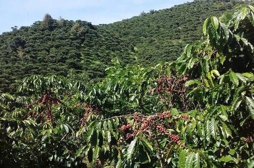 Người tạo chuỗi liên kết cà phê ở Tân Văn