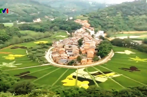 Bức tranh khổng lồ trên cánh đồng lúa ở Trung Quốc