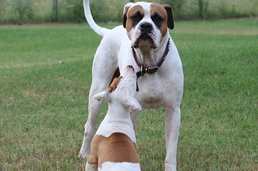Mỹ: Chi phí làm thẻ tên cho chó tăng vọt do thuế nhập khẩu nhôm, thép