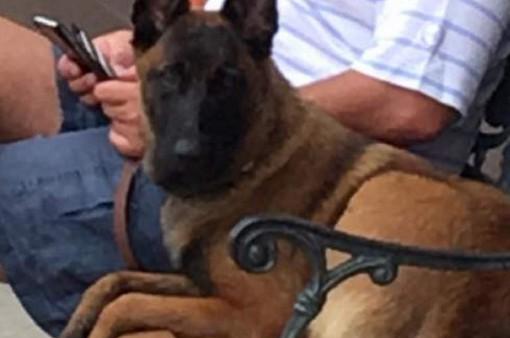 Rylee - Chú chó đã bơi 10km và đi bộ thêm 19km nữa để về lại với chủ nhân