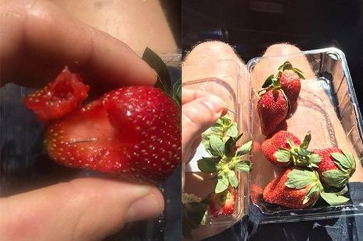 """Ngành trồng cây ăn quả Australia điêu đứng vì vấn nạn """"kim khâu"""""""