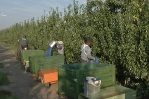 Kinh nghiệm hỗ trợ phát triển nông nghiệp hữu cơ trên thế giới