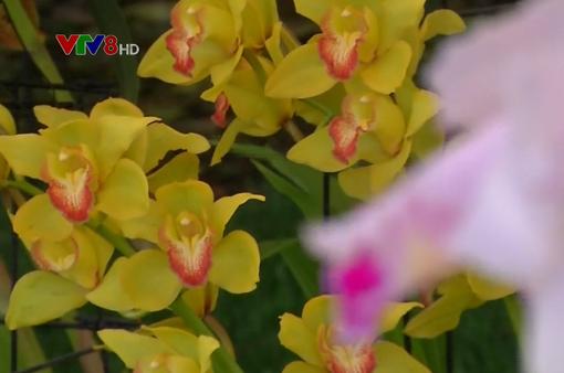 Triển lãm hoa lan quốc tế thường niên tại Colombia