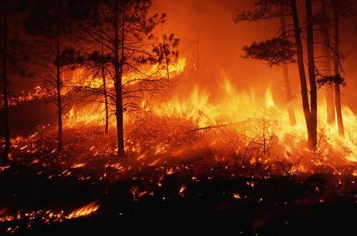 Mỹ: Người dân bang Wyoming sơ tán khẩn cấp do cháy rừng