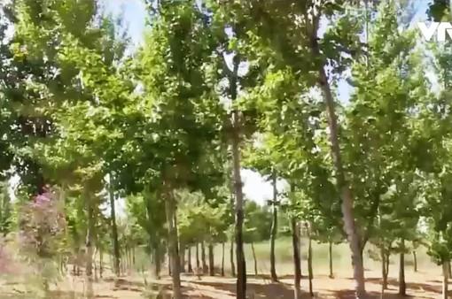 Người dân tại khu Nội Mông, Trung Quốc nỗ lực phủ xanh sa mạc