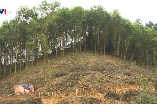Phá rừng, chiếm đất trồng keo: Hoạt động trái phép diễn ra công khai