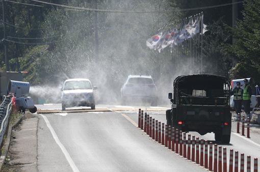 Hàn Quốc thiết lập 4 khu vực ngăn dịch lây lan từ lợn rừng