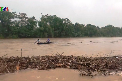 Bất chấp hiểm nguy, người dân vớt củi giữa dòng nước lũ