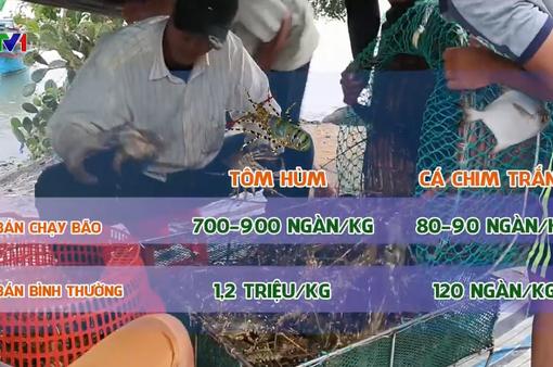 Người nuôi trồng thiệt hại vì bán tháo thủy sản chạy bão