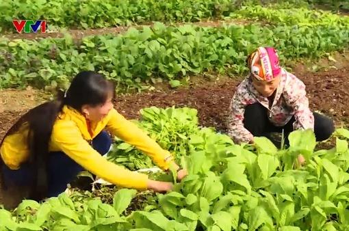 Người phụ nữ quyết tâm làm nông nghiệp sạch