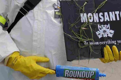 Monsanto thừa nhận sử dụng thuốc trừ sâu trái phép tại Mỹ