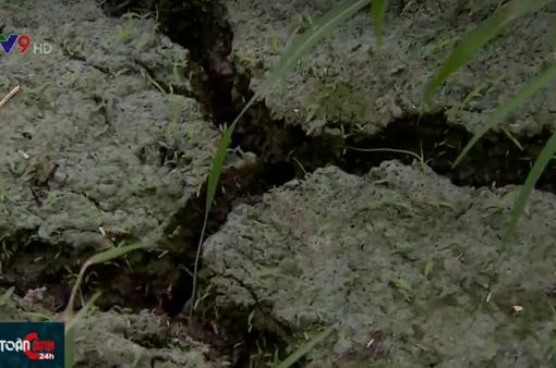Đất thoái hóa, bạc màu, năng suất lúa giảm nghiêm trọng