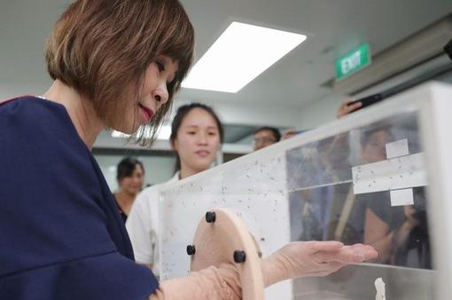 Singapore mở trại nuôi muỗi chống sốt xuất huyết