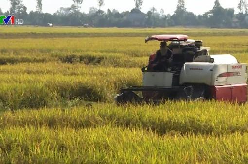 Đề xuất nhiều giải pháp tiêu thụ lúa