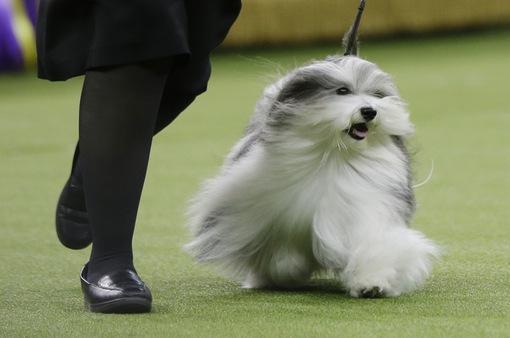 Người dân Hàn Quốc từ bỏ thói quen ăn thịt chó