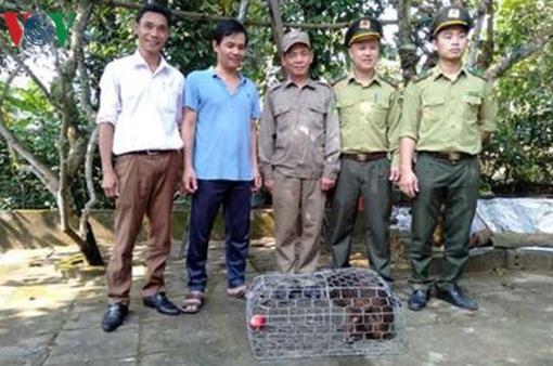 Người dân Quảng Bình giao nộp cá thể khỉ mặt đỏ quý hiếm