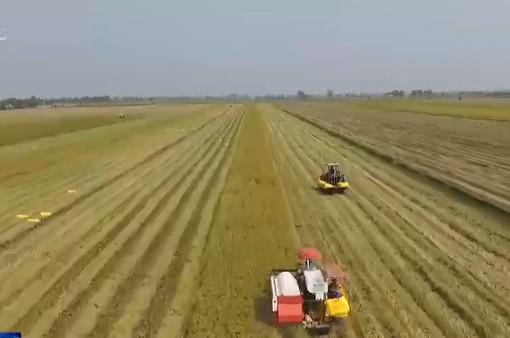 Doanh nghiệp xuất khẩu gạo đang gặp khó về đầu ra