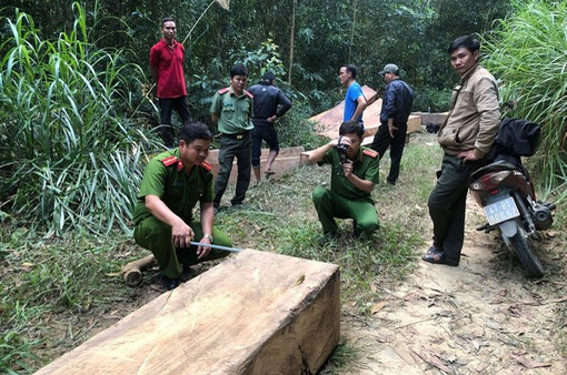 Điều tra vụ vận chuyển 14m3 gỗ lậu tại huyện M'Đrắk, Đắk Lắk