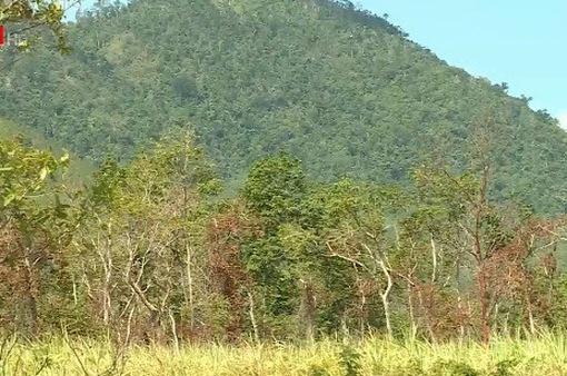 """Sẽ gắn """"biển số"""" để giữ rừng căm xe tại Khánh Hòa"""