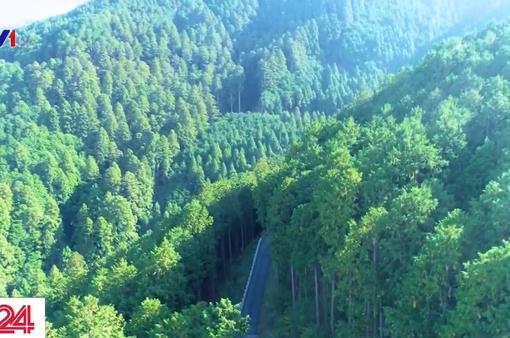 Khám phá phương pháp khai thác rừng đặc biệt tại Nhật Bản