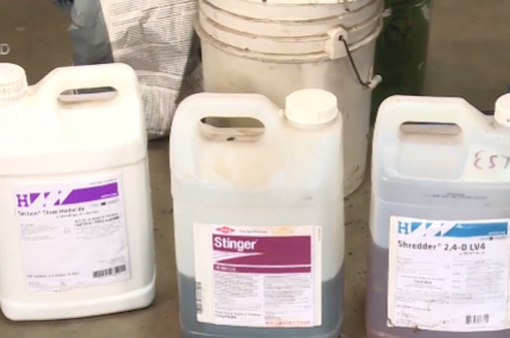 Nông dân Mỹ trước nỗi lo độc hại từ thuốc diệt cỏ