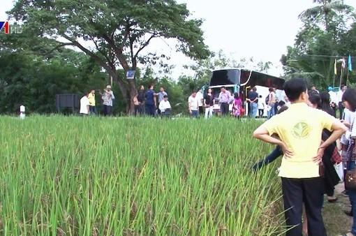 Nông dân Việt sang Thái Lan học kinh nghiệm sản xuất nông nghiệp