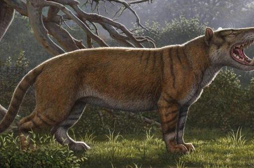 Hóa thạch sư tử khổng lồ được tìm thấy trong... ngăn kéo viện bảo tàng