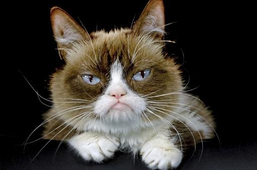 """""""Cô mèo cau có"""" nổi tiếng trên mạng xã hội qua đời"""