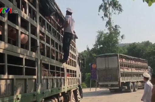 Đà Nẵng tích cực ngăn chặn dịch tả lợn châu Phi