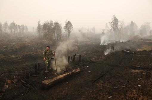 Khói đốt rừng từ Indonesia lan sang các nước láng giềng